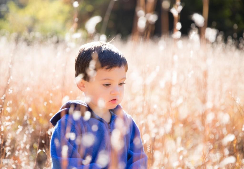 little boy in light filled long grass